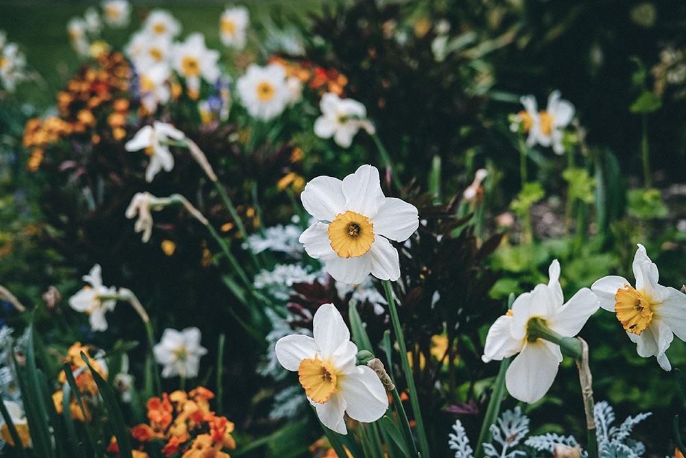 flower bulb landscaper designer